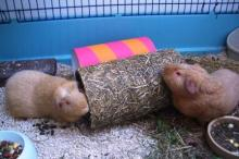 Fred and George with new chubes