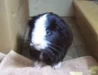 Humphrey waits