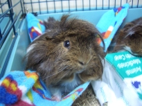 Dougall on the hammock