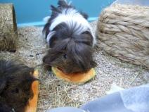 Dougall loves melon