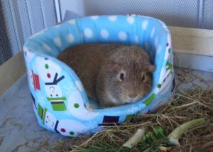 Colman in his snowman bed