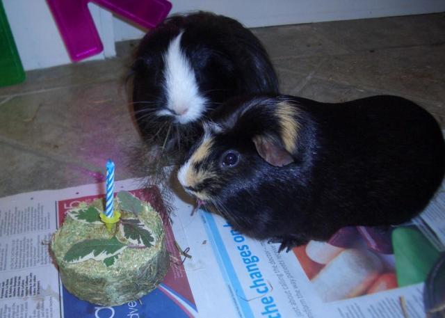 Hector and Humphrey