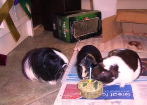 Three Hs and Hec's birthday cake