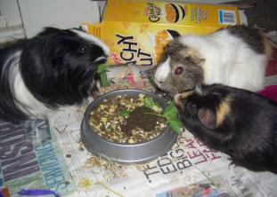 Humphrey, Victor and Hector share the cake