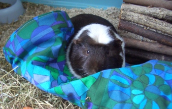 Hugo 2007 to 26.07.2011