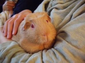 Fred cuddling Auntie Dawn