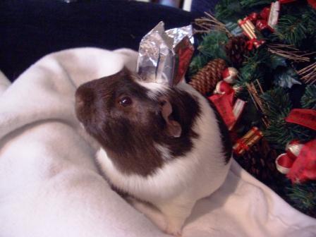 Hugo crowned