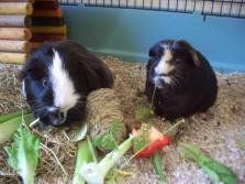 Hector and Humphrey have Christmas dinner