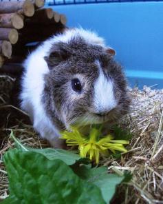 Mmm Dandelion
