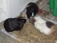Hector, Humphrey and Vic