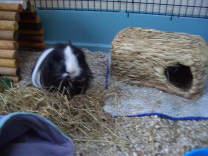 Humphrey and his new grassy hutch