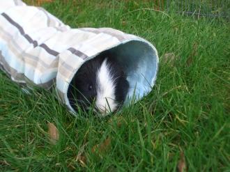 Humphrey tunnelling