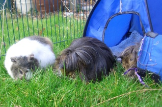 lawnmowing squad