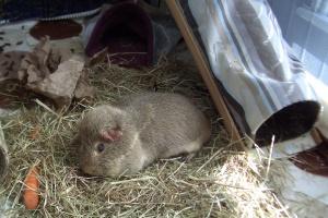 Colman asleep on the hay