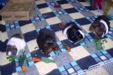 Four have birthday breakfast 2014