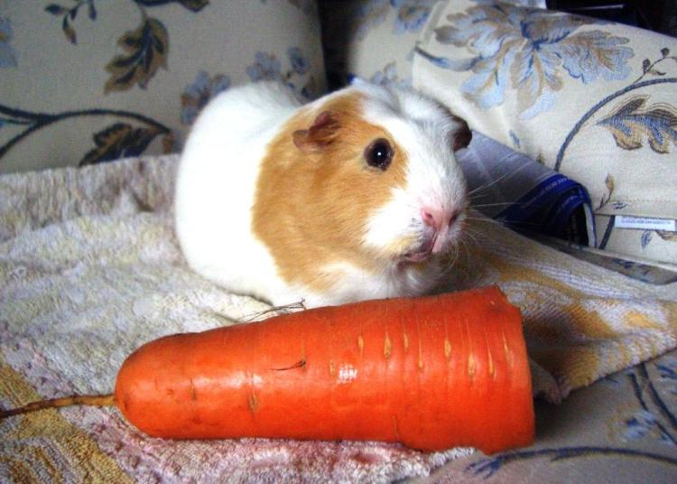 Kevins-carrot