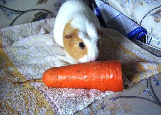 Kevs carrot
