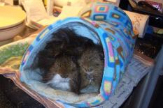Snuggly Dylan & Dougall