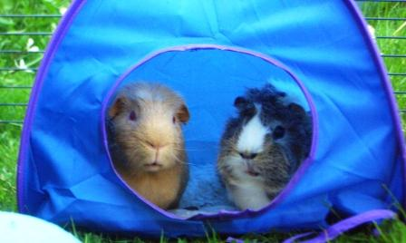 Fred and Victor go camping