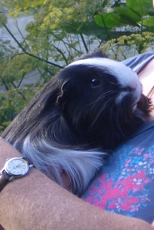 Humphrey April 2008 to 1.10.2014