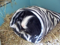 Humphrey in the zebra sack