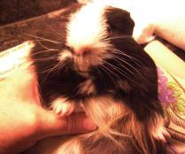 Humphrey's tummy