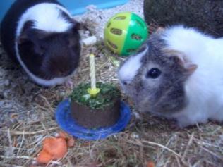 Hugo and Victor (Vic's 1st birthday)