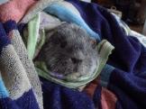 Oscar after bath
