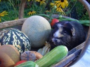 Hector's mellow fruitfulness