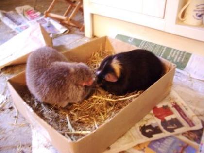 Hector meets Midge