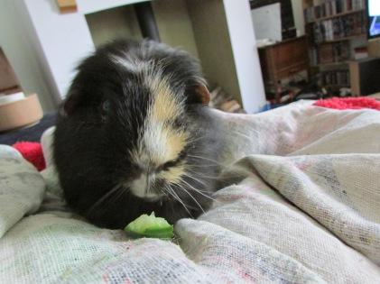 Hector on Mummy's lap