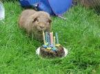 Colman's 7th birthday 2015