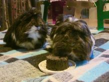 Dylan & Dougall with cake