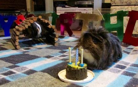Dylan and Dougall's fourth birthday