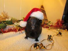 Santa Percy