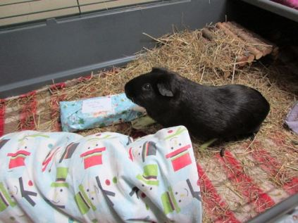 Mr Percy with his present