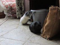Oscar investigates the bucket