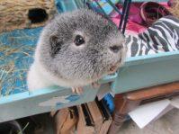 Oscar wants cucumber