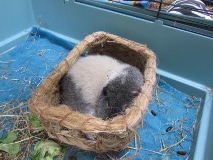 Oscar uses a hay house upside down