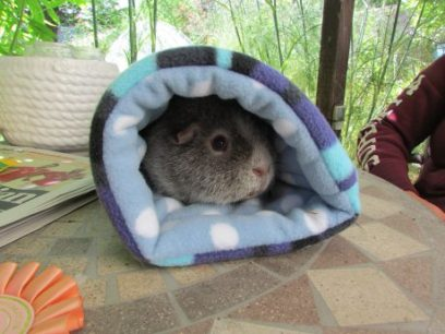 Midge in his tunnel