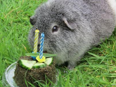 Birthday 2016