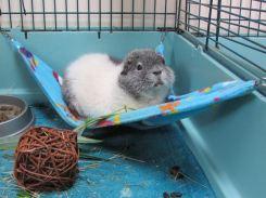 Oscar on the hammock