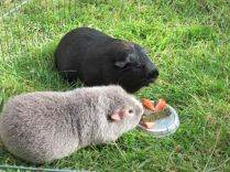 Midge and Percy eat cake
