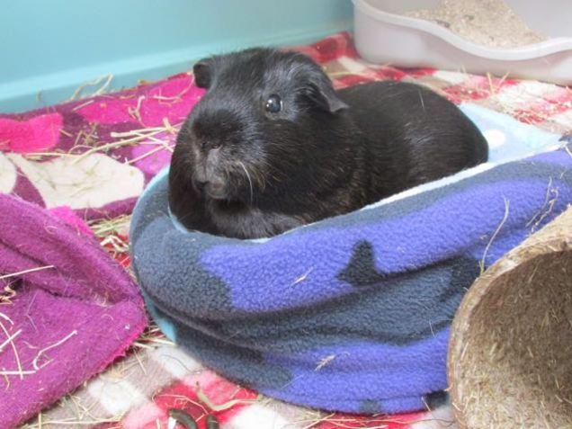 Mr Percy Pig