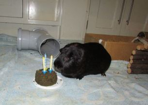 Percy's birthday party in the kitchen