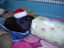 Percy and his present