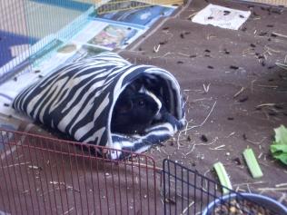 Hector hides