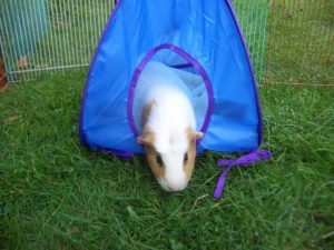 Kevin's new tent