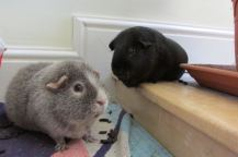 Midge and Percy in the kitchen