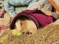Kevin asleep in his purple sack